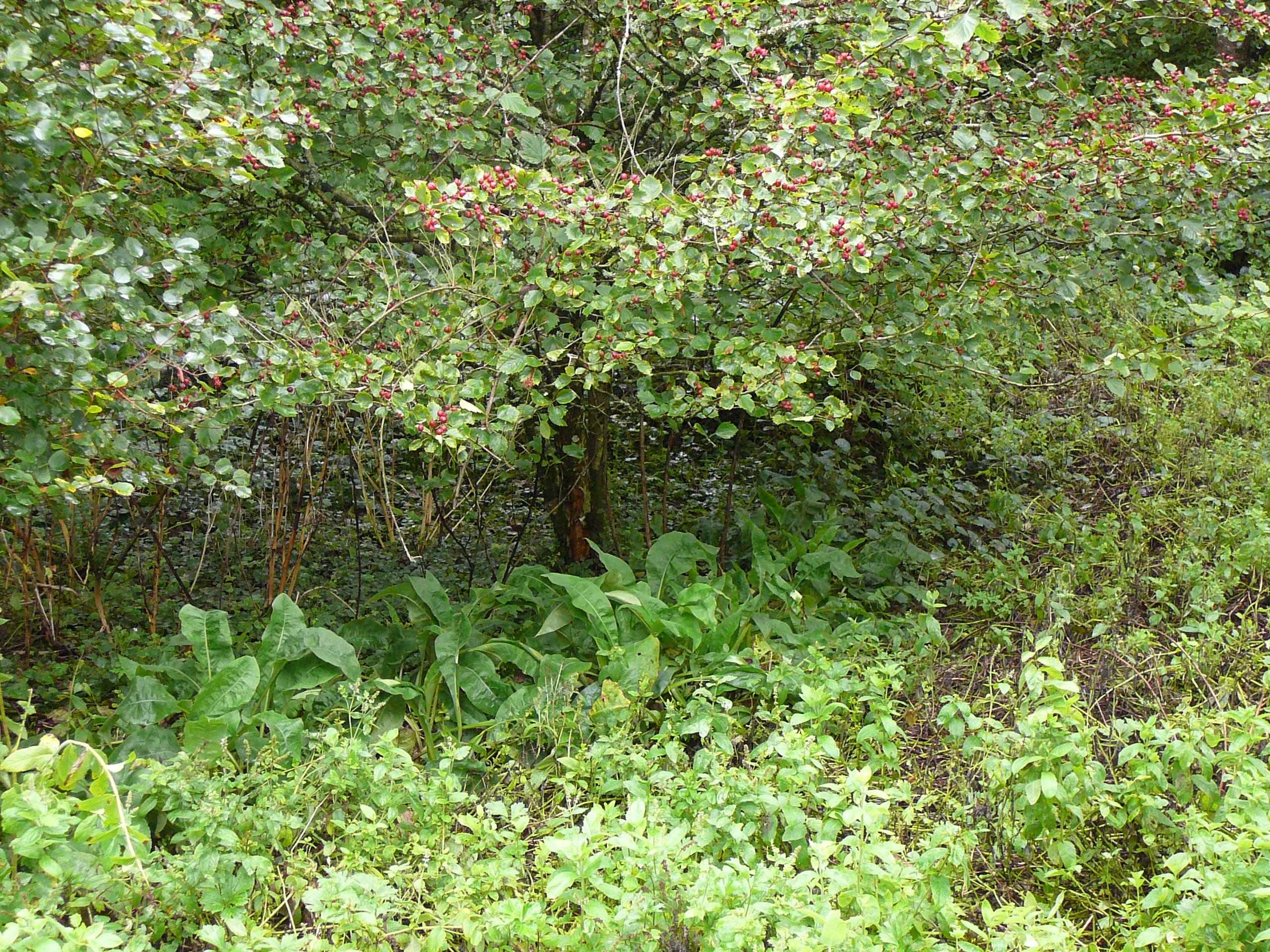 Forest Gardening in a Nutshell Veganic Agriculture Network